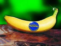 bananier entretien et culture photos de feuilles et fleurs de bananiers. Black Bedroom Furniture Sets. Home Design Ideas