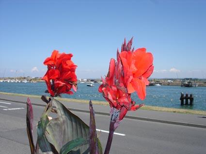 Canna for Plante exterieur fleur rouge